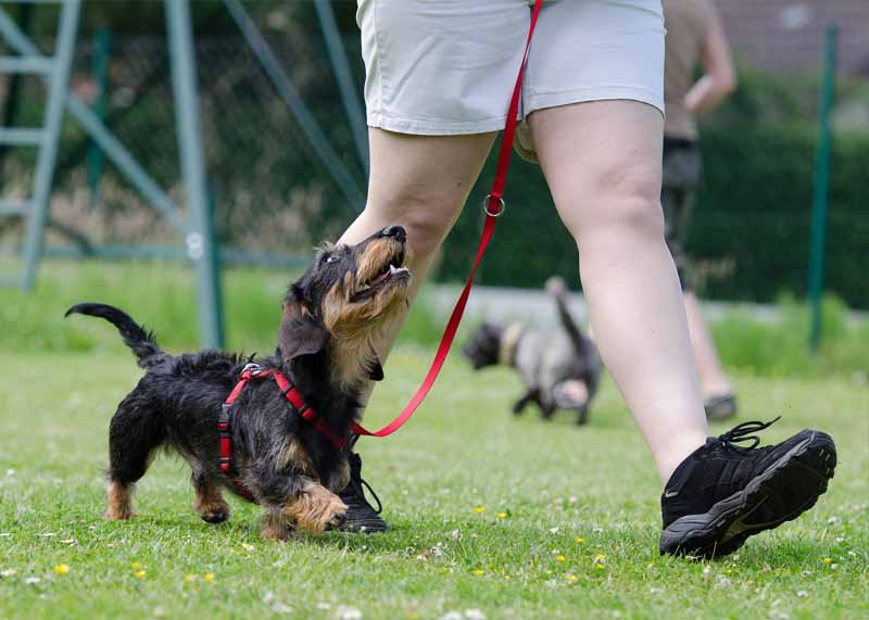 Feet and Paws_Hightlights_Private Dog Training_Positive Reinforcement