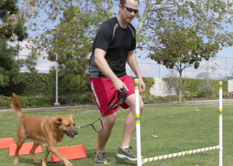 Feet and Paws_Fitness Classes with your Dog_Workout with My Dog