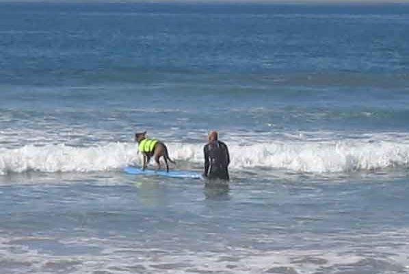 A Team Preparing at Surf City Surf Dog
