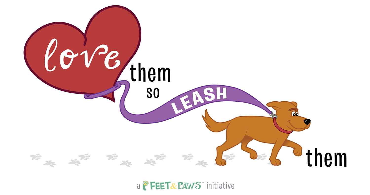 love them so keep your dog on leash