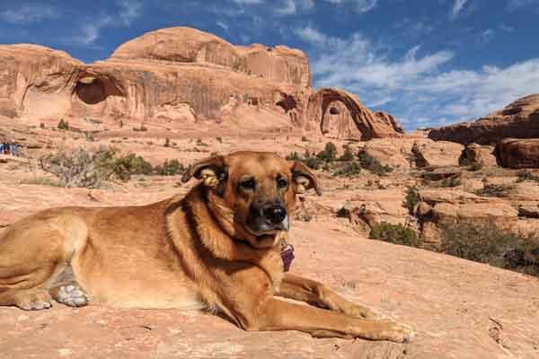 Berlin taking a break on a dog friendly hike in Moab