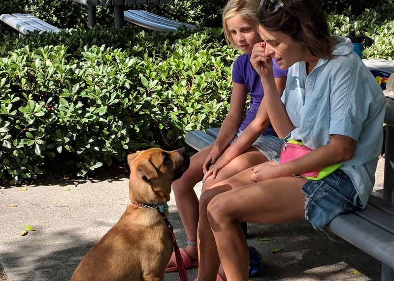 Manners 101 Dog Training Class