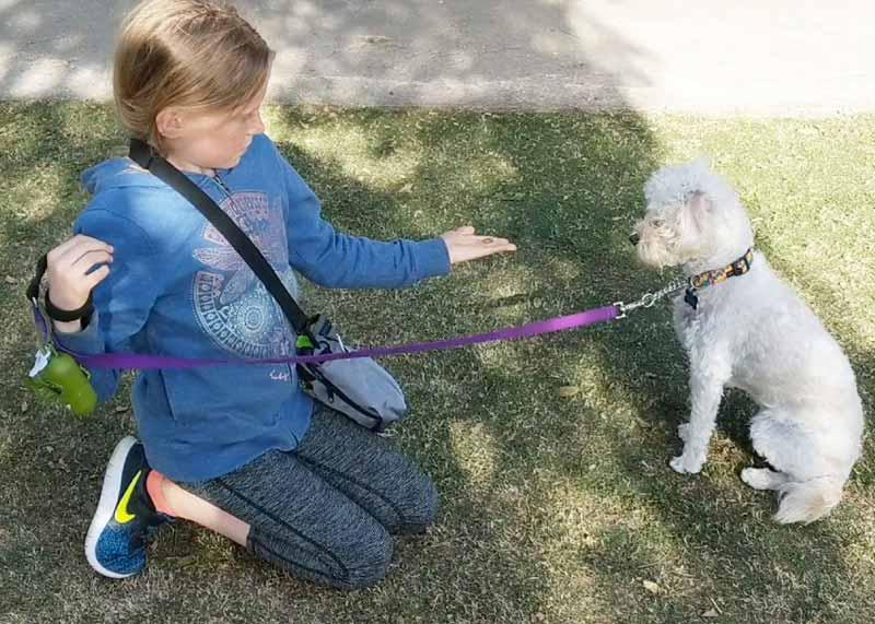 Santa Monica Dog Trainer