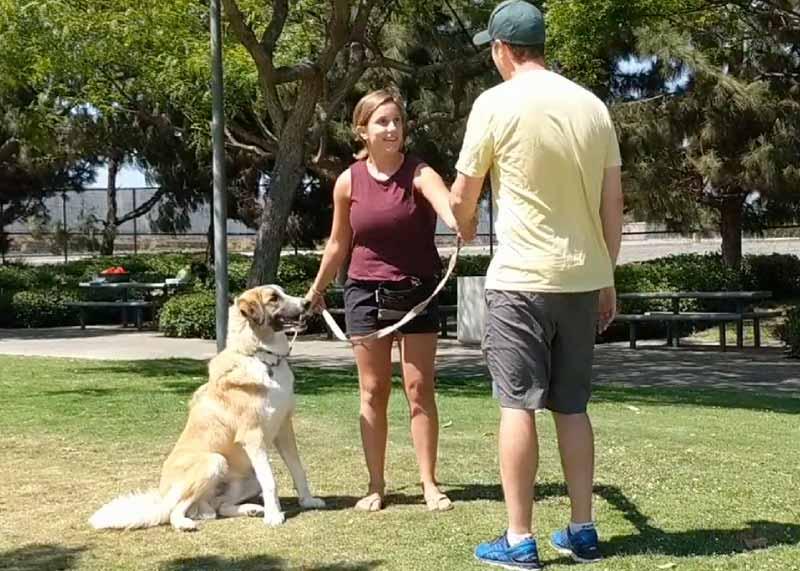 Beyond Basics Dog Training Class