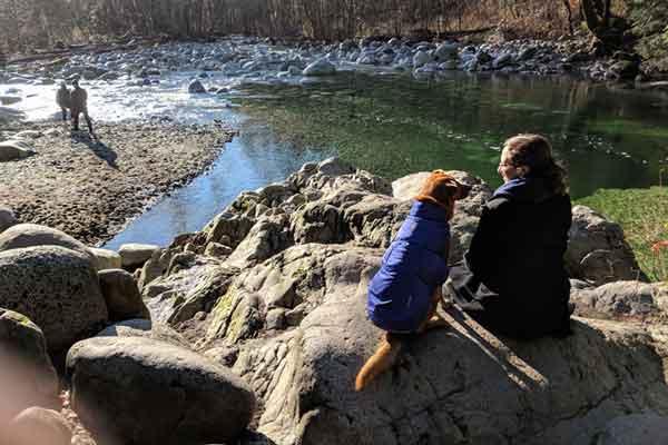 Dog Friendly Vancouver - Lynn Canyon