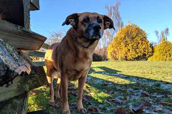 Dog Parks in Vancouver — Devonian Harbour Park