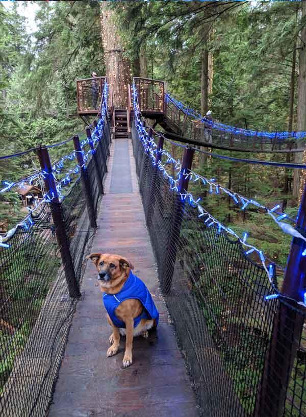 Dog Friendly Vancouver Capilano Suspension Bridge