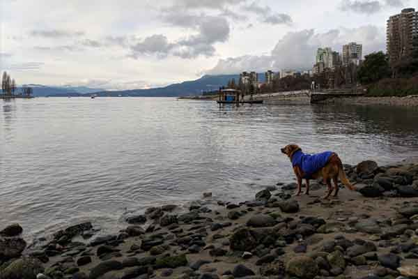Dog Parks Vancouver — Sunset Beach Dog Beach
