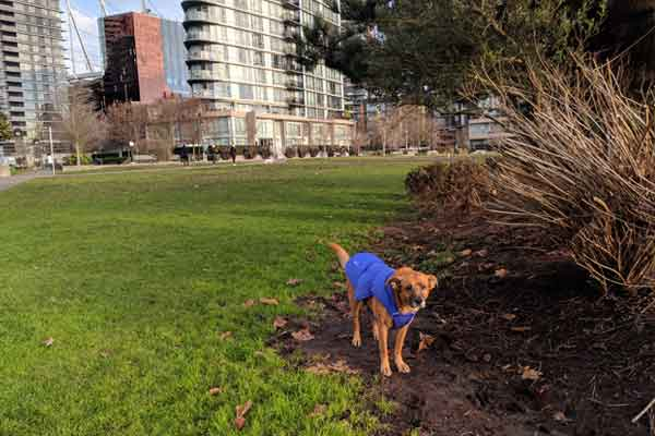 Dog Parks in Vancouver — Cooper's Park