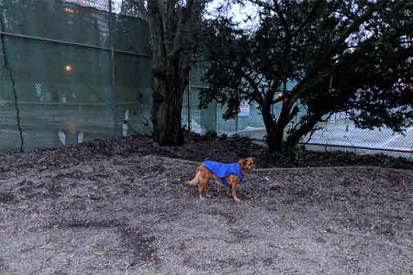 Dog Parks Vancouver — Stanley Park Dog Park
