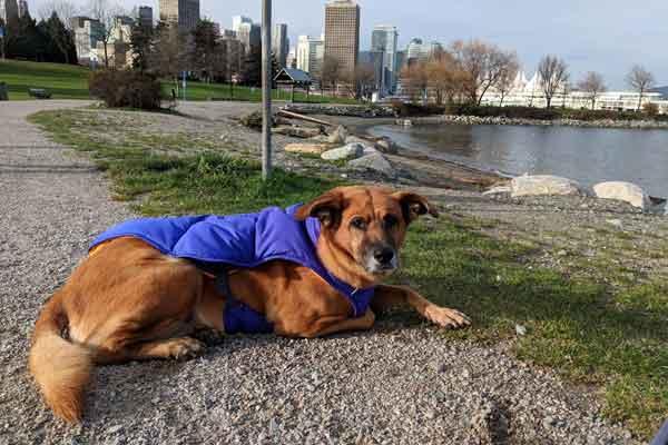 Dog Parks Vancouver — CRAB Park at portside