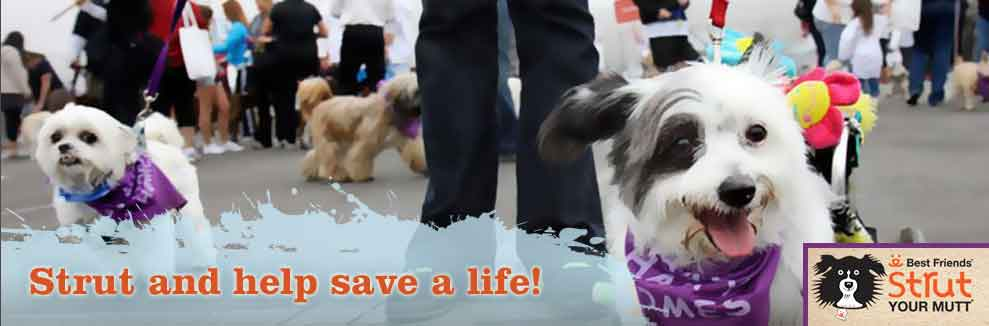 Leash Up And Save Lives