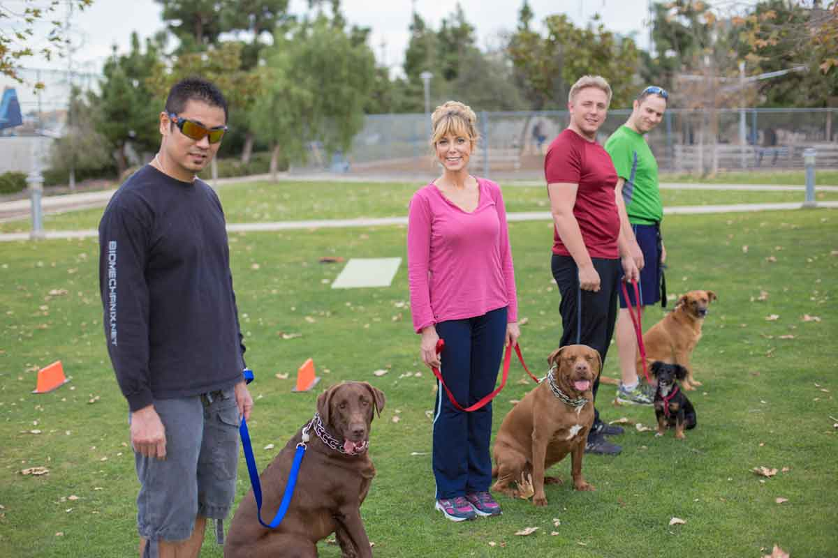 Dog Training Classes Online and In Person