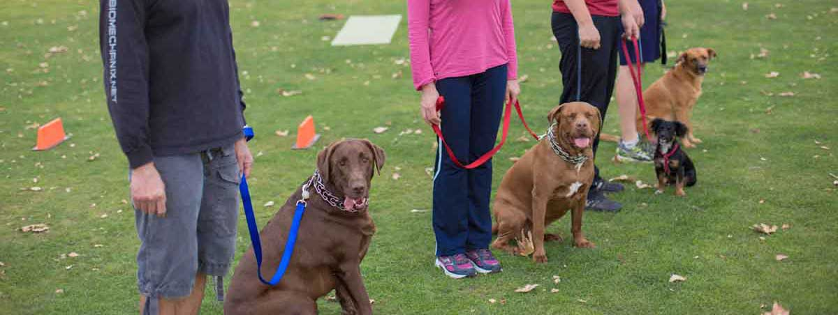 Dog Training Classes in Santa Monica
