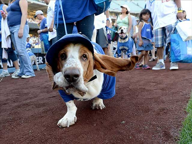 costume contest at bark at the park
