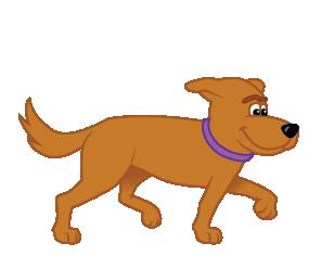 Why Spay Female Dog