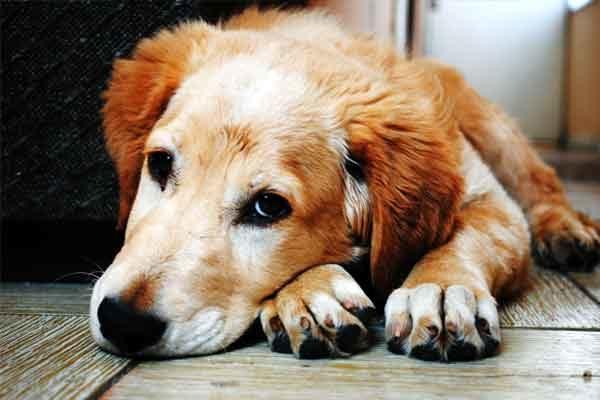 Dog Calming Signals