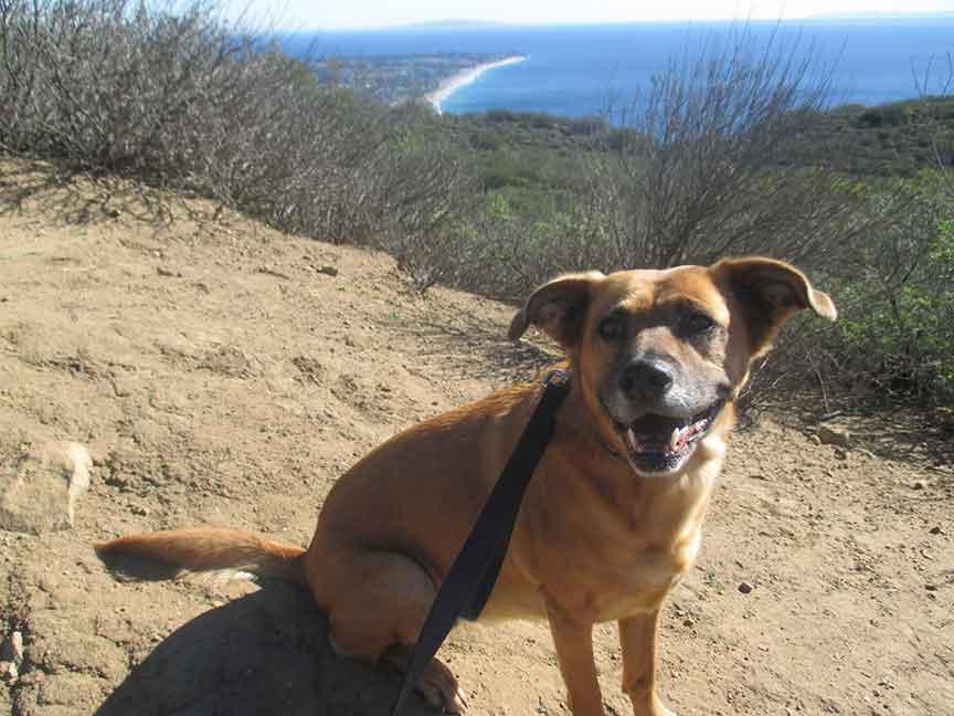 Dog Hike in Malibu